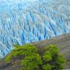 Glaciar Grey, Parque Nacional Torres del Paine. Patagonia Chilena