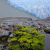 Glaciar Grey, PN de Torres del Paine. Patagonia Chilena