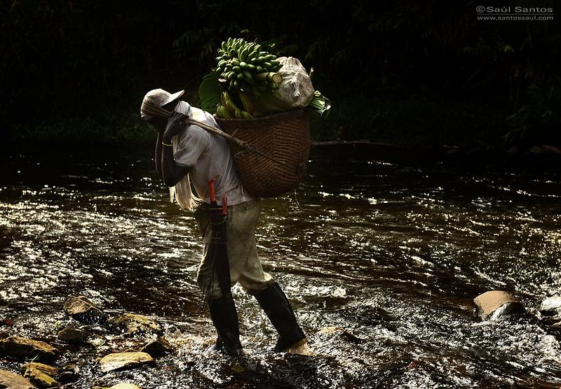 Selva en el departamento Del Chocó. Colombia