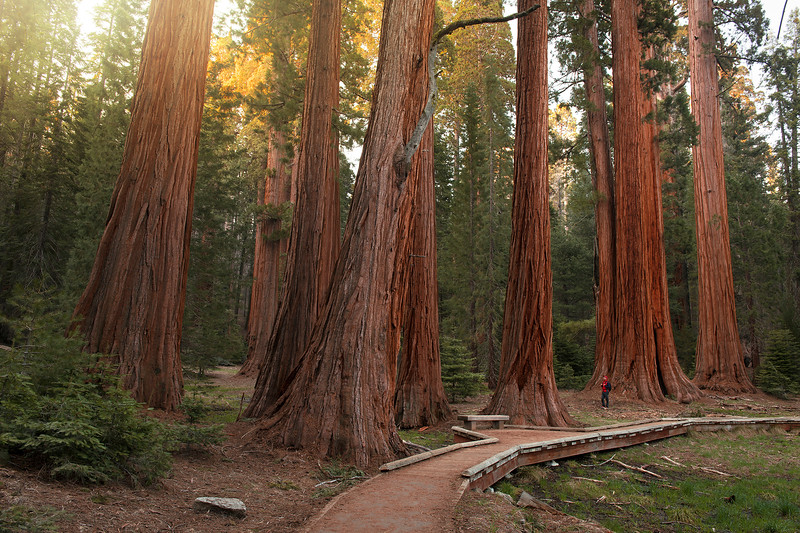 Sequoia National Park, California,  United States of America.