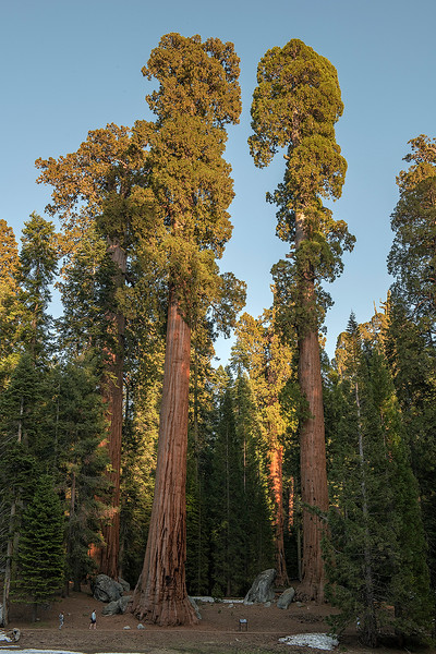 Sequoia National Park, California,  United States of America.