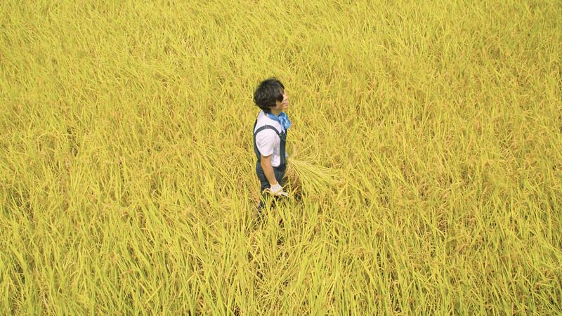 稲刈り体験|Rice harvesting