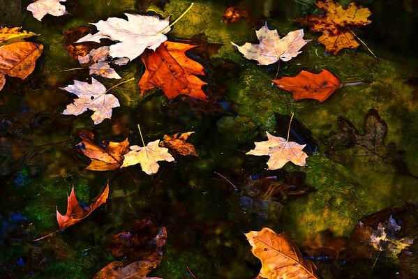 Autumn's Art