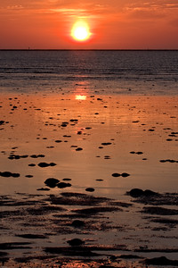 Delaware Bay Sunrise over Horseshoe Crabs