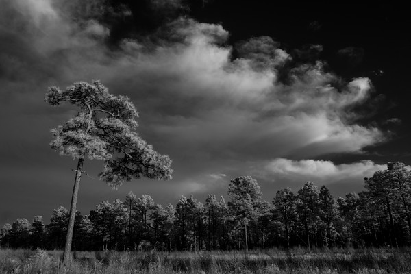 Lone Pine Infrared