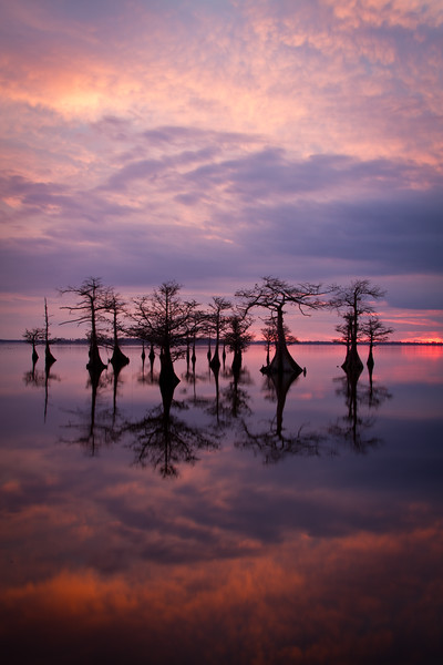 Lake Mattamuskeet cypress sunset.