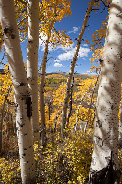 Through the Aspen, vertical
