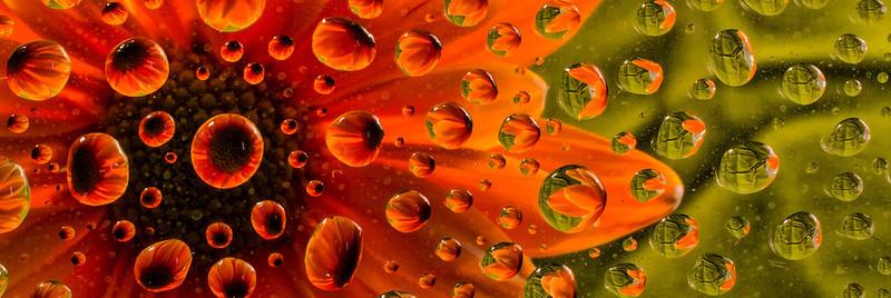 Oragne Flower