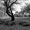 BW Graves