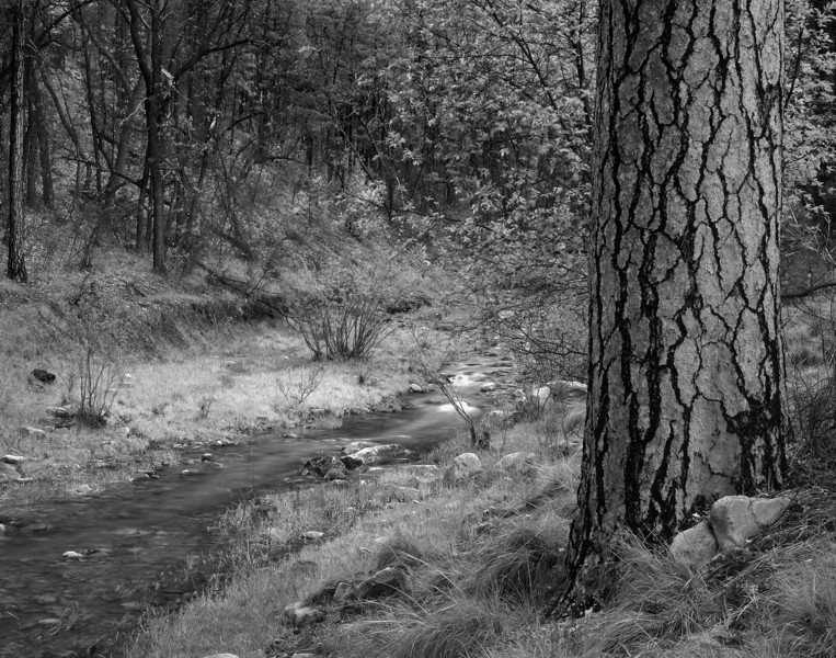 B&W TONTO CREEK