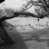Tumo graves framed with tree