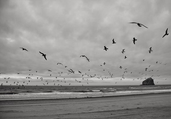 Oregon  Beach - Birds and Surf