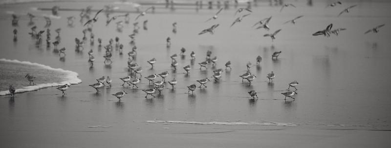 Oregon Beach Birds