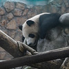 Panda Pavillion