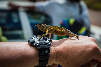 I paid a kid 500 Tanzanian shillings to let me photograph his chameleon on my arm. There's 1500 shillings to the dollar.