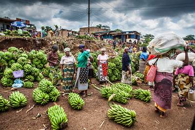 Ladies bringing giant clusters of bananas to the local banana auction area.