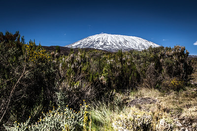 Africa - Kilimanjaro