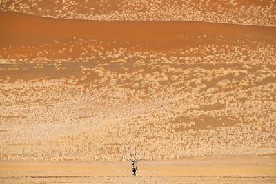 Oryx in Landscape