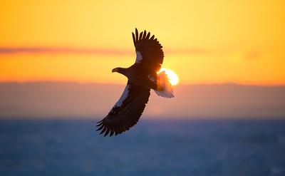 Stellar Sunrise