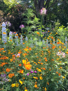 Wildflower Garden, Picket Fence, Atlanta