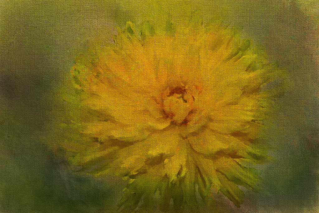 Monet's  Yellow Dahlia