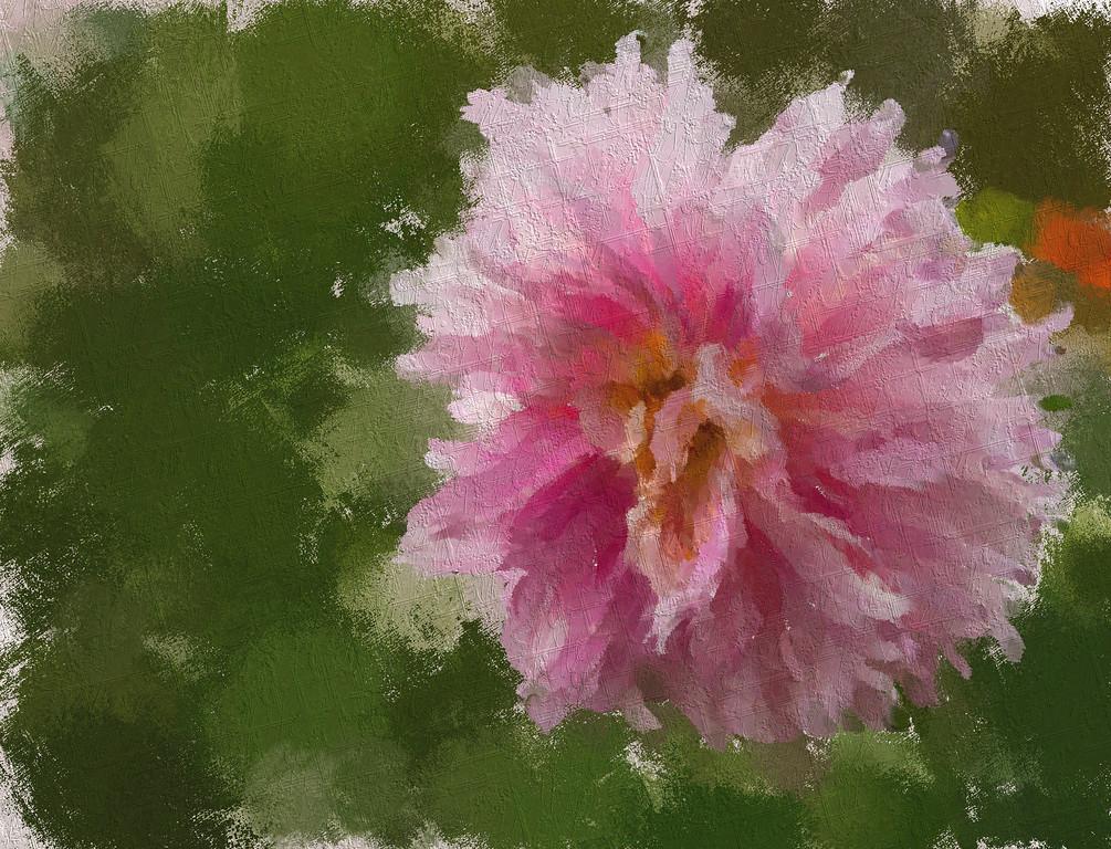 Monet's Light Pink Dahlia