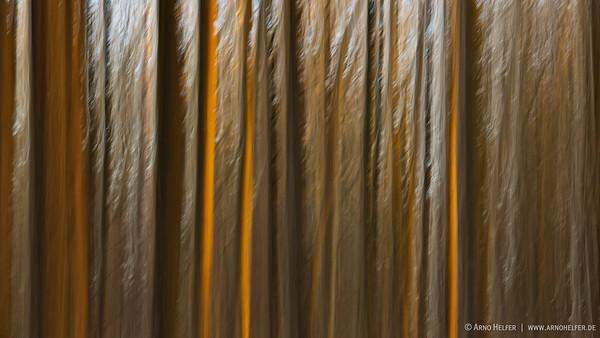 Wald im Abendlicht - abstrakt