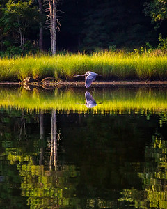 Reflections in Flight - Bourne, Massachusetts