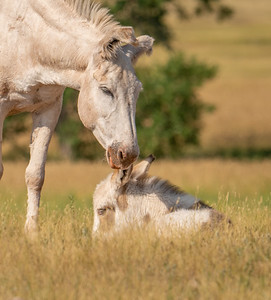 A Jennie And Her Foal