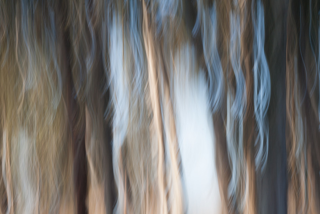 Waves in the Trees