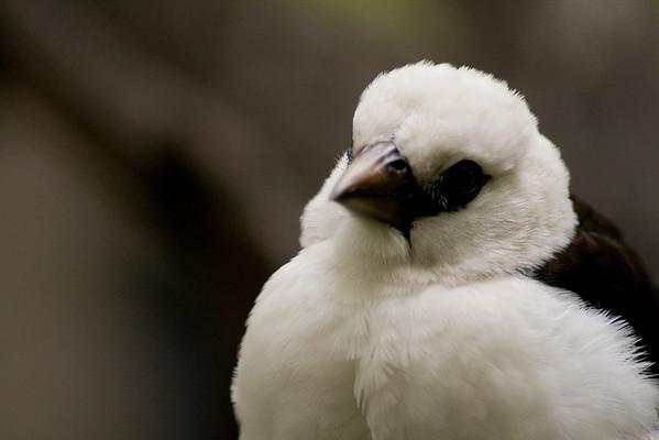 Prints UnavailableJust a bird