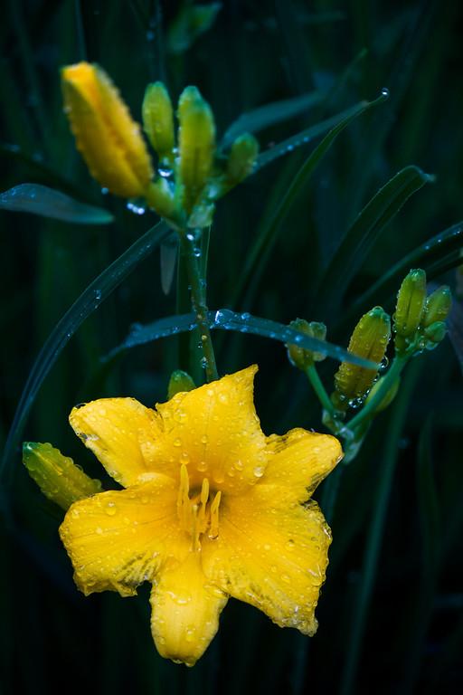 Flower in the Rain