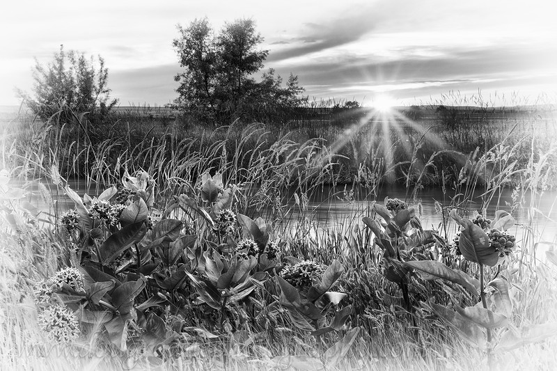 Sunset and Wildflowers, Billings Heights