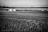 Farmland, South of Billings