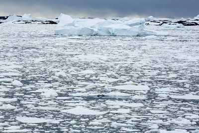 Brash ice, Vernadsky, Antarctica 24 January 2019