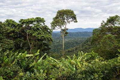 Scenery, Wildsumaco, Ecuador 12 November 2013