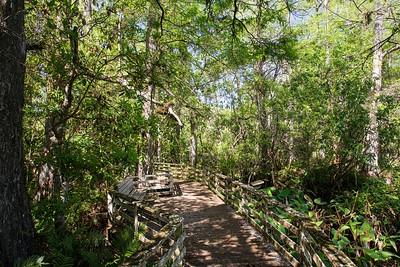 Corkscrew Swamp, Florida, USA 4 March 2012