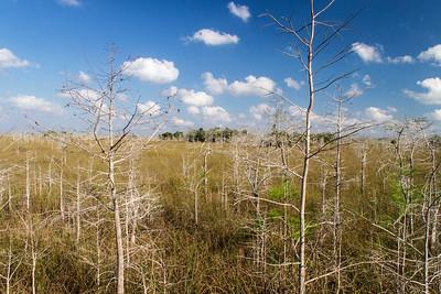 Everglades, Florida, USA 24 February 2012