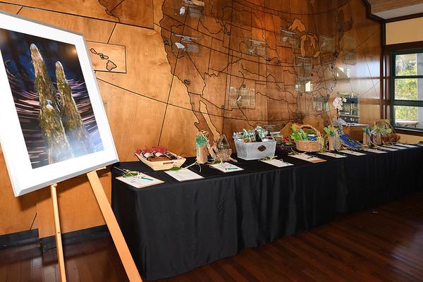 Corkscrew Cypress Celebration 2018