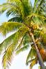 Palm Tree 8597
