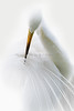 Great Egret 9469 a