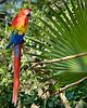 Macaw 4550