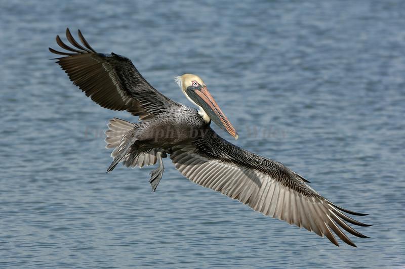 Pelican 859