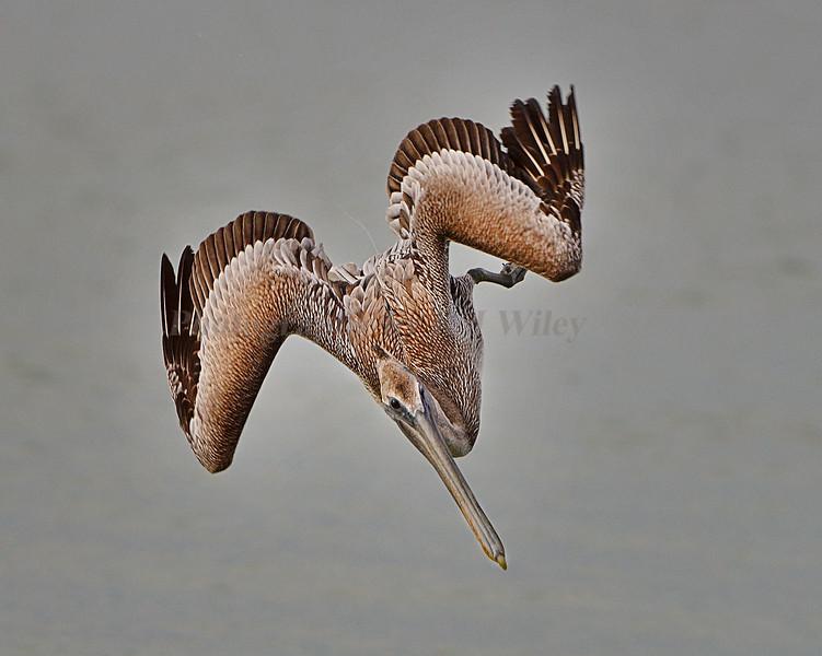 Pelican 8445