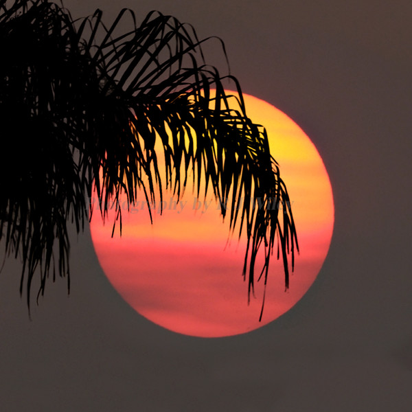 Sunset 340 15X15