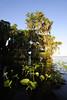 Cypress trees Lake Istokpoga 816
