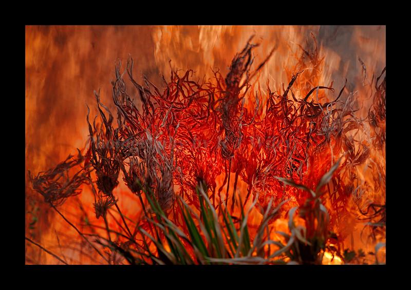 Fire 9300RJWiley