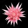 Flower 4957 12X12
