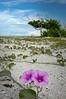 Beach 3181RJWiley