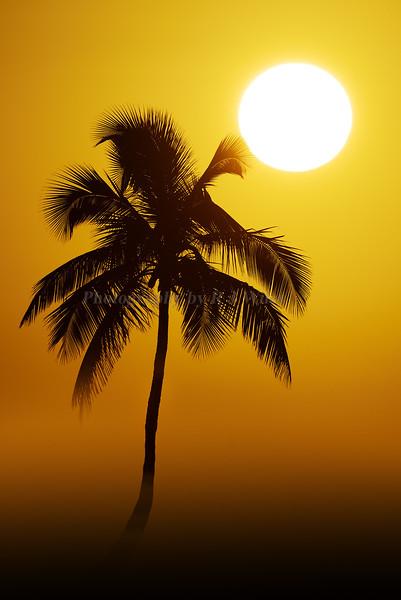 Sunrise palm and fog  8900
